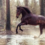 photographe équestre cheval chantilly événement